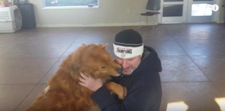 perro-perdido-reencuentro3