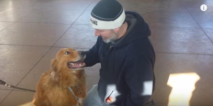 perro-perdido-reencuentro5