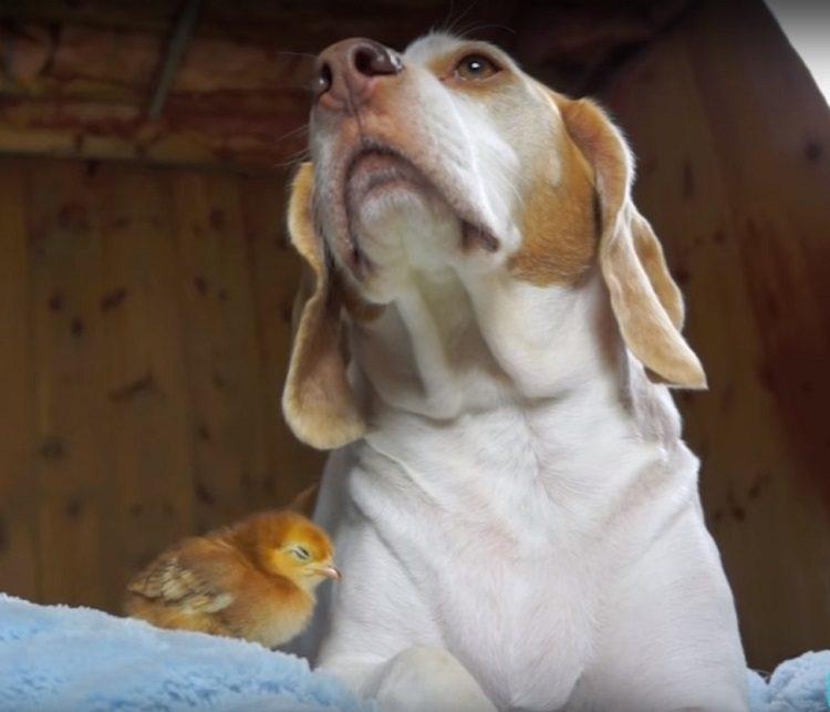 perro recibe sorpresa 2