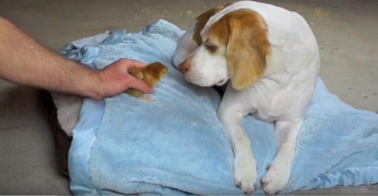 perro recibe sorpresa