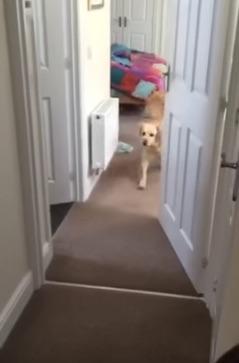 perro1