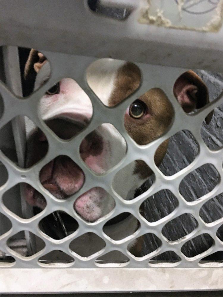 perros de sótano rescatados 3