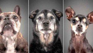 perros-mayores-rescatados1 - copia