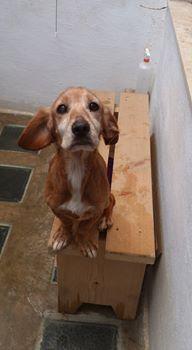perros-mayores-rescatados2