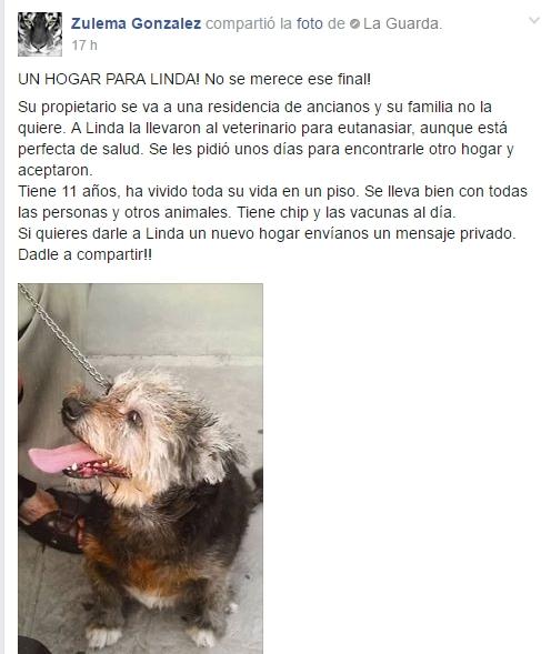 perros-mayores-rescatados3