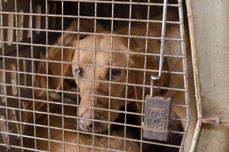 perros-rescatados-criadero1