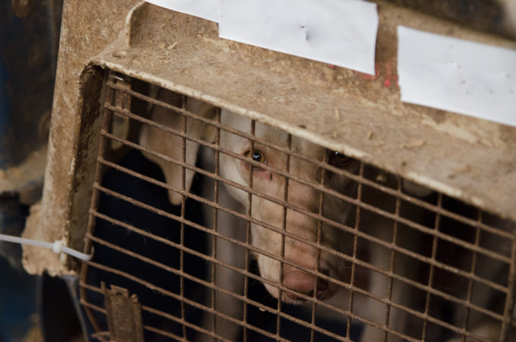 perros-rescatados-criadero10