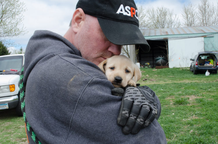 perros-rescatados-criadero11
