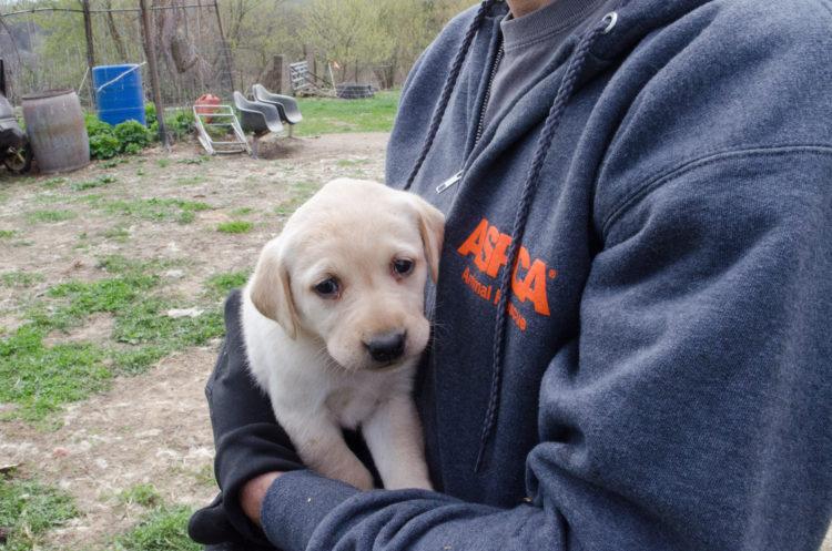 perros-rescatados-criadero12