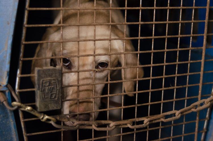 perros-rescatados-criadero2