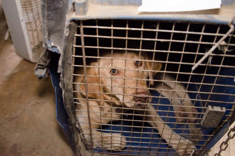 perros-rescatados-criadero3