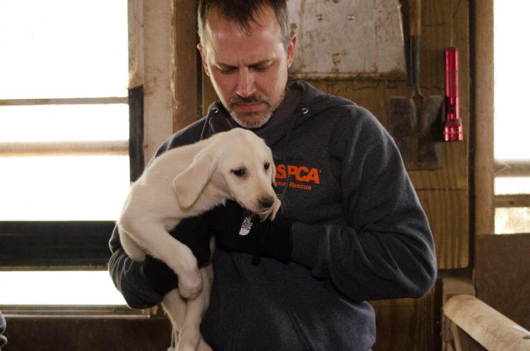 perros-rescatados-criadero4