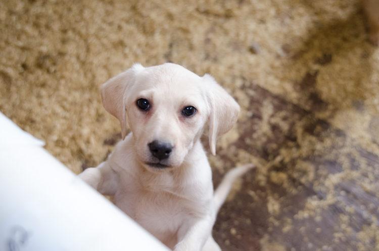 perros-rescatados-criadero6