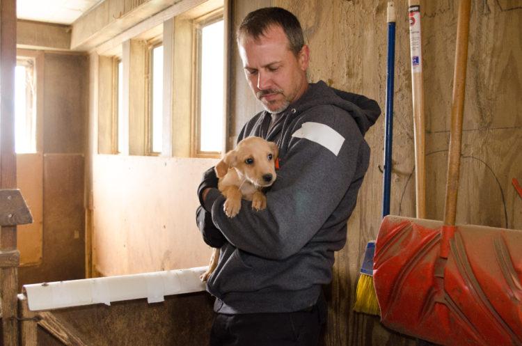 perros-rescatados-criadero7