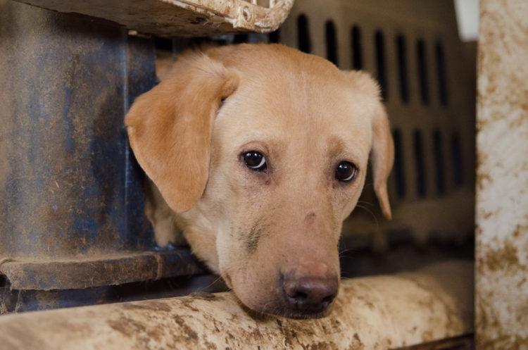 perros-rescatados-criadero8