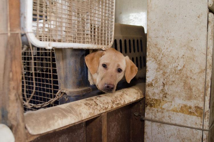 perros-rescatados-criadero9