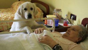 peticion-para-que-permitan-mascotas-en-residencias-de-ancianos1 - copia