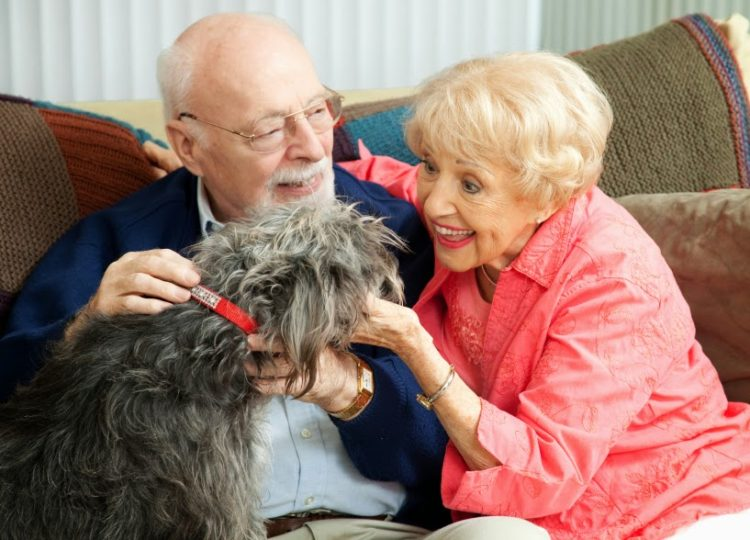 Senior couple at home on the couch, playing with their adorable mixed breed dog.