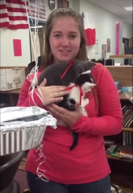 profesora-sorpresa-gatos2