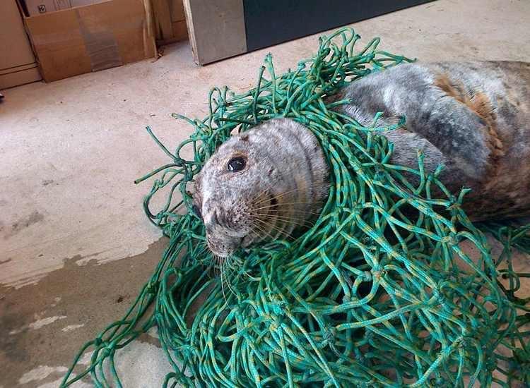 rescate-de-foca2