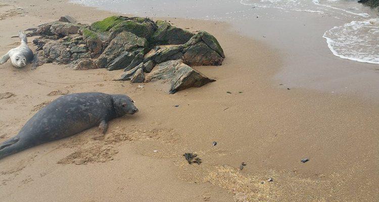 rescate-de-foca4