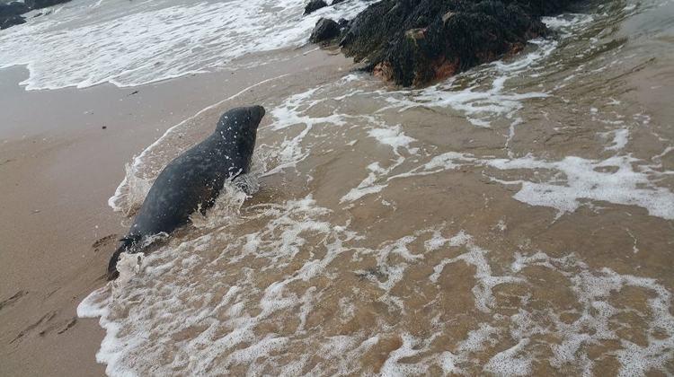 rescate-de-foca5