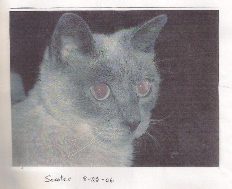 scooter gato mas viejo del mundo blanco y negro
