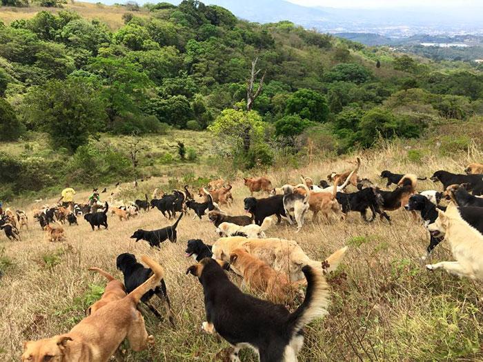 territorio de zaguates costa rica 6