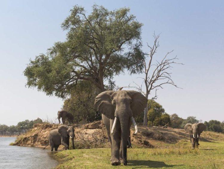 zimbabue-animales-venta1
