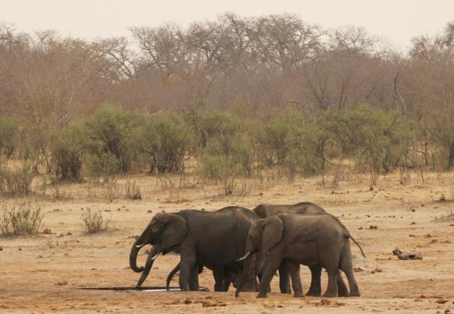 zimbabue-animales-venta2