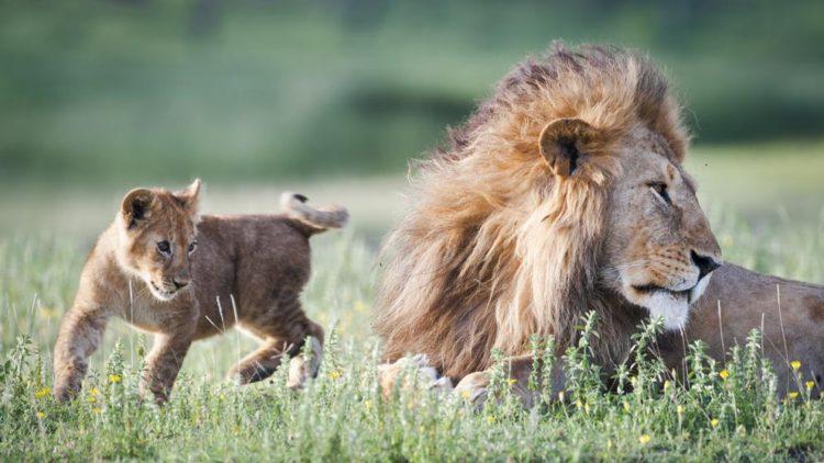 zimbabue-animales-venta4