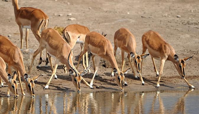 zimbabue-animales-venta6