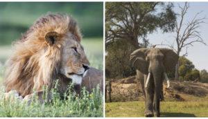 zimbabue-venta-animales