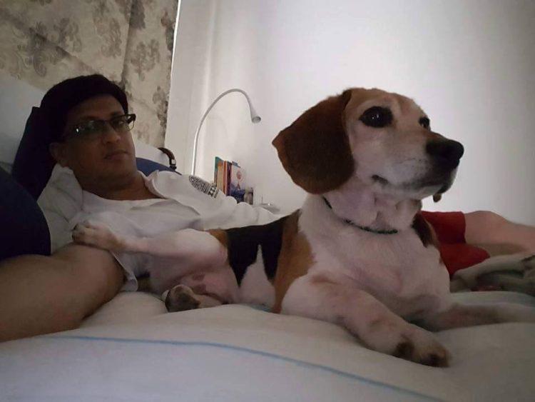 42-Beagles-rescatados 11