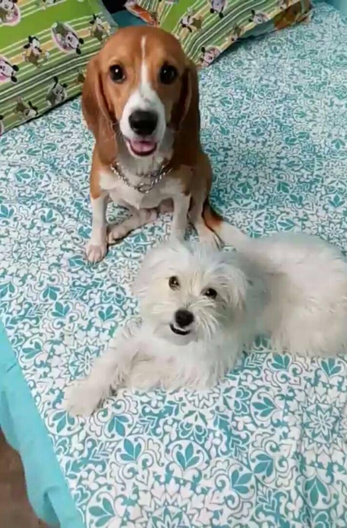 42-Beagles-rescatados 15