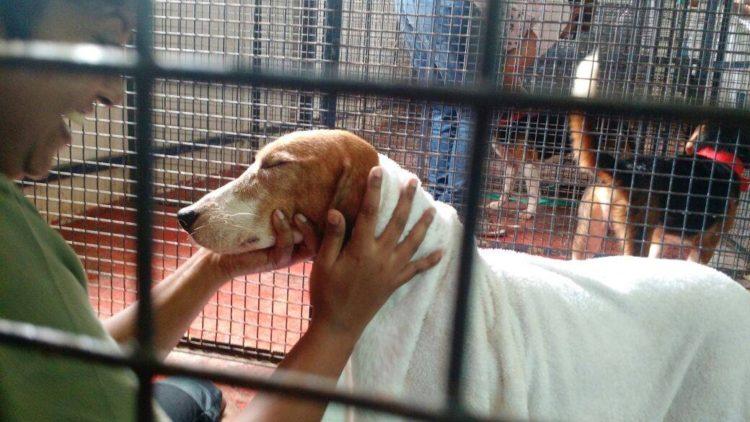 42-Beagles-rescatados 5