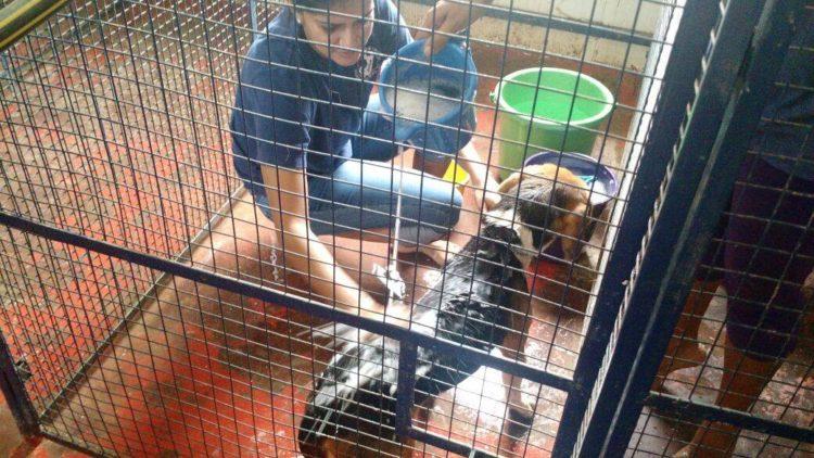 42-Beagles-rescatados 7
