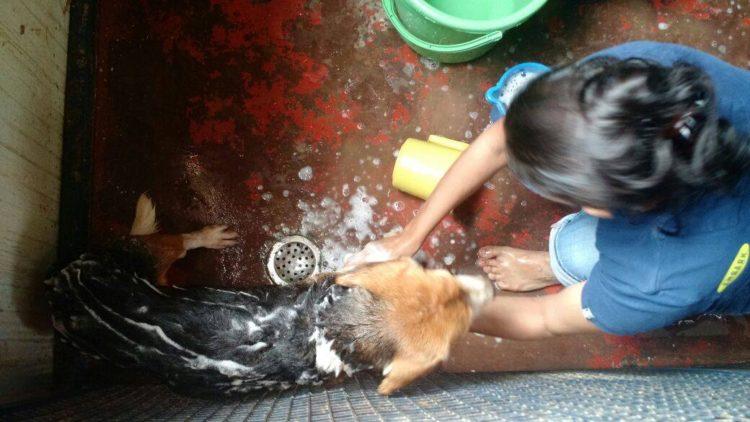 42-Beagles-rescatados 8