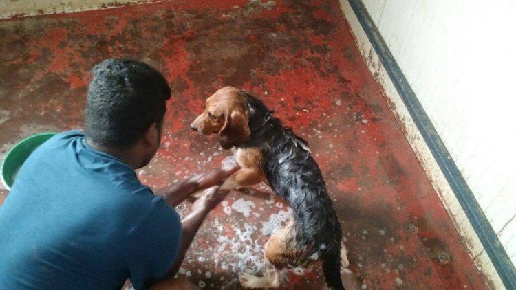 42-Beagles-rescatados 9