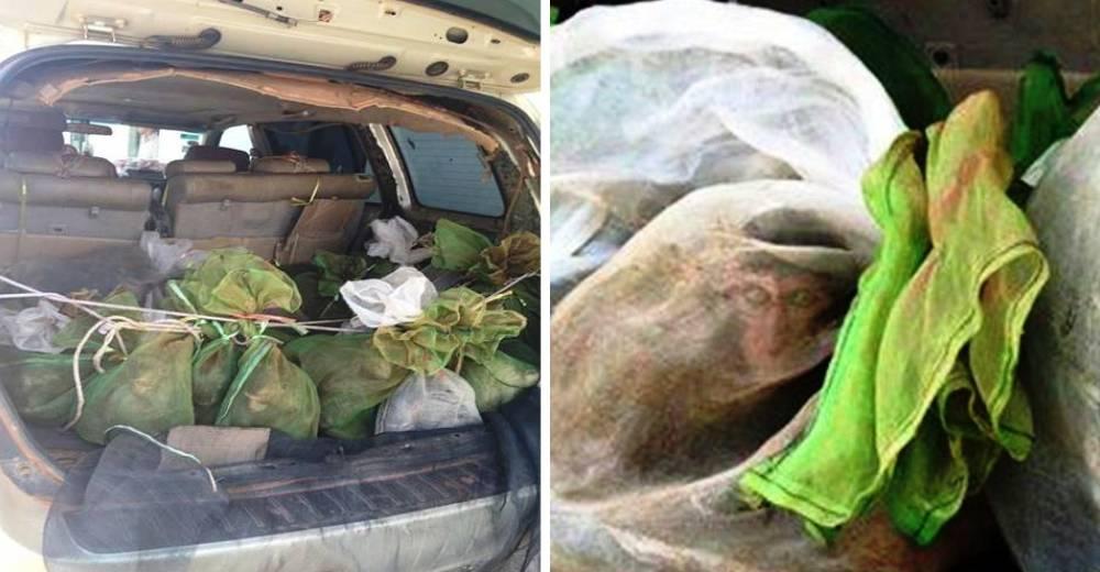 43 monos salvados camboya coche 1 portada
