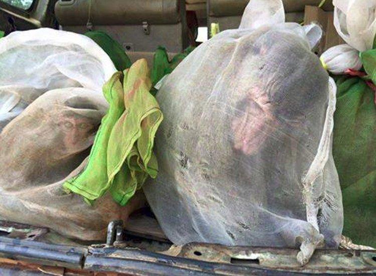 43 monos salvados camboya coche 1