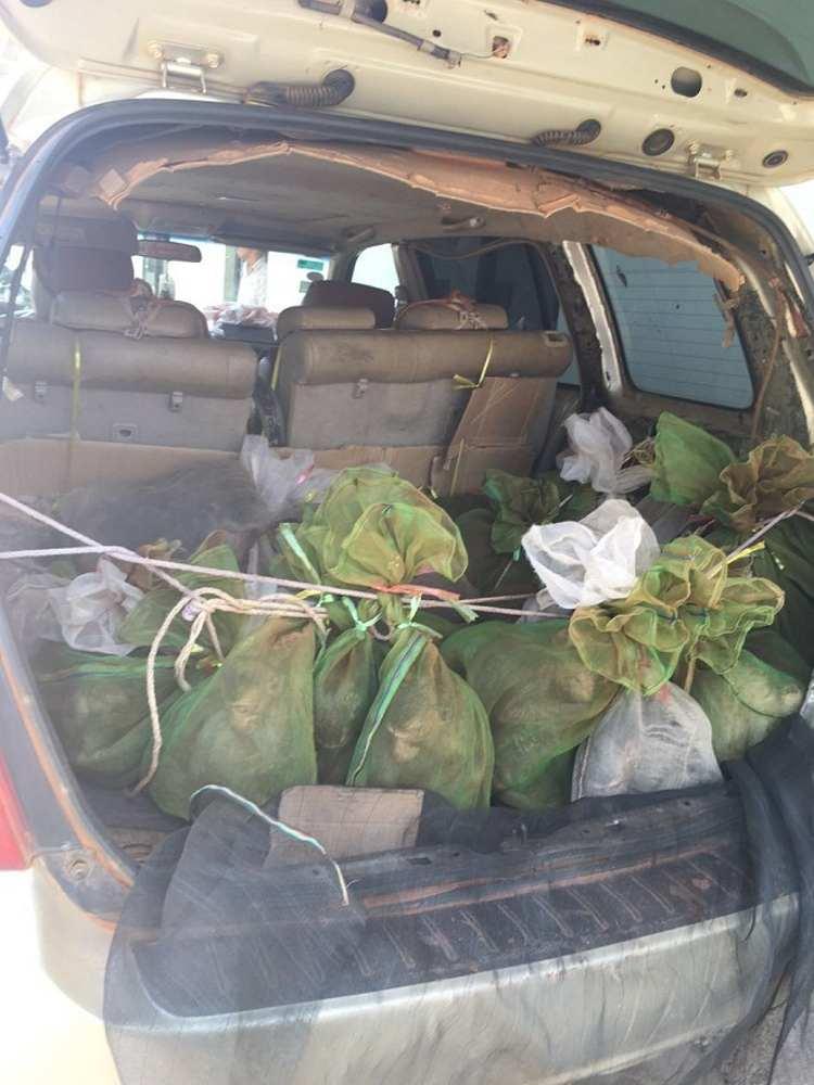 43 monos salvados camboya coche 3