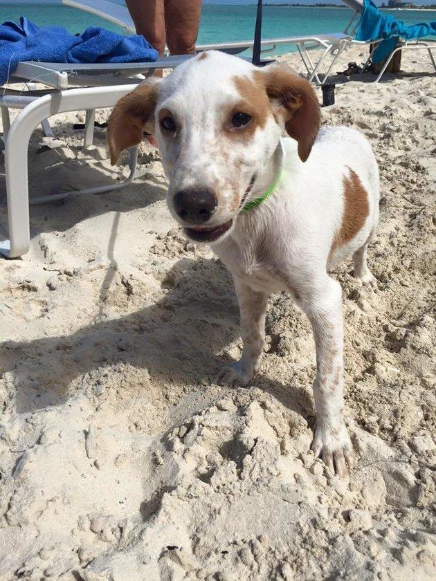 Adoptar-perros-playa 1
