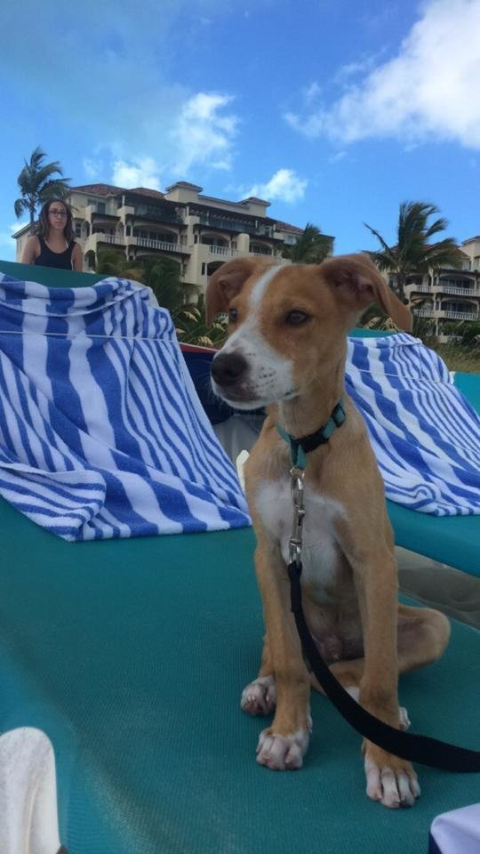 Adoptar-perros-playa 2
