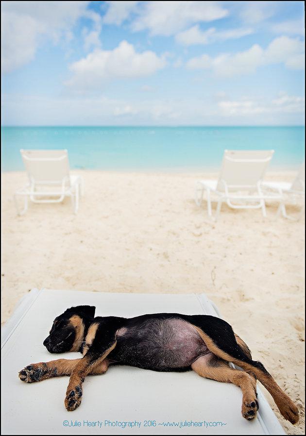 Adoptar-perros-playa 4