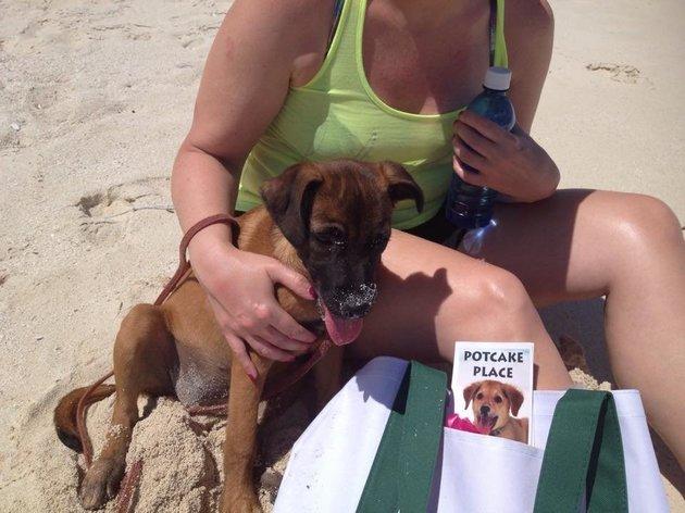 Adoptar-perros-playa