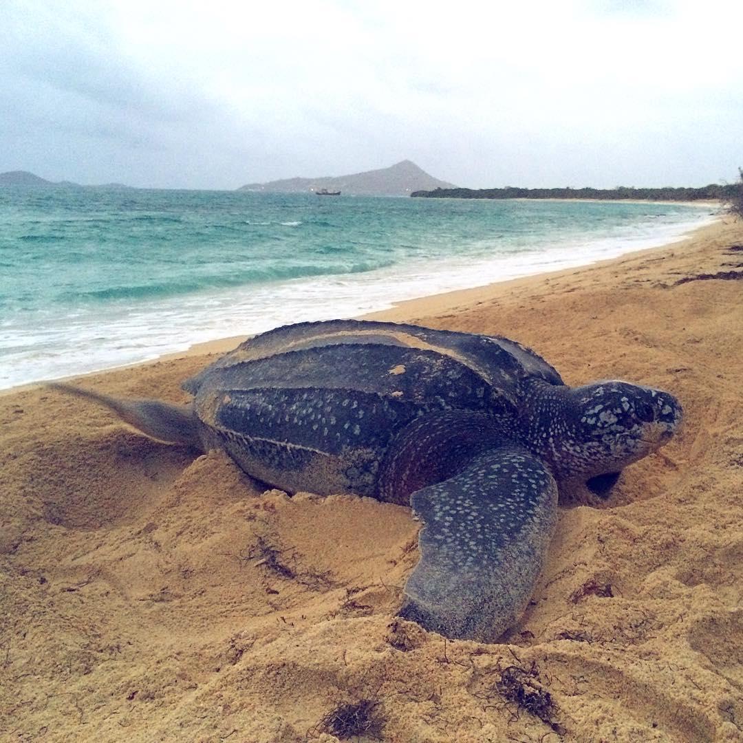 Boca-tortuga-marina 1