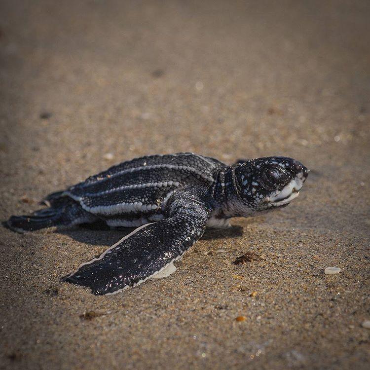 Boca-tortuga-marina 2