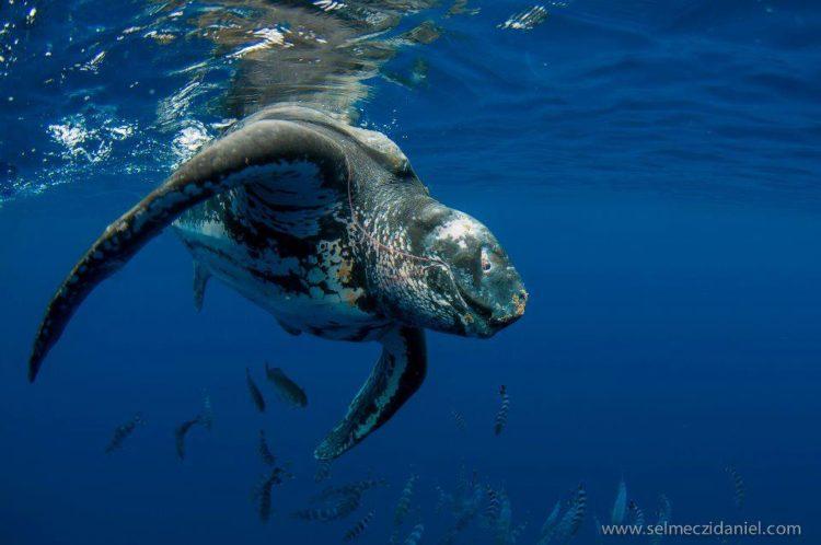 Boca-tortuga-marina 4