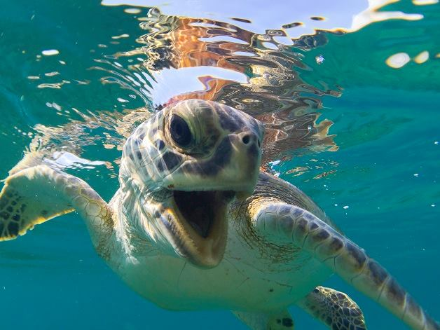 Boca-tortuga-marina 6